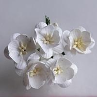 http://www.artimeno.pl/ozdoby/7464-wild-orchid-crafts-cherry-blossoms-kwiaty-wisni-white-5szt.html