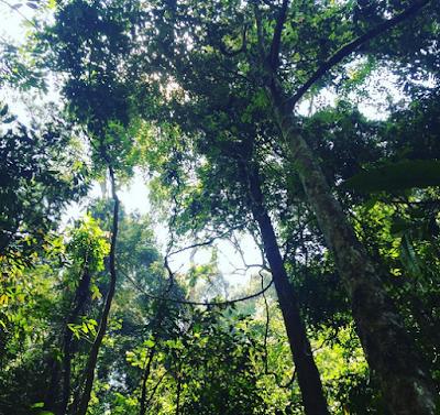 Bukit Lawang, North Sumatera5
