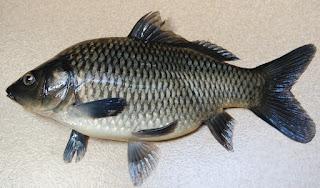 Umpan-Ikan-Mas-Subang