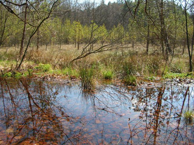 przyroda, rezerwat, woda, drzewa, las