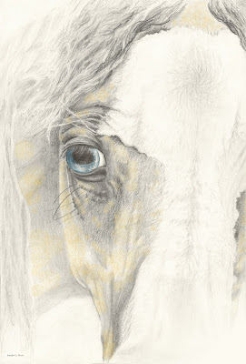 horse drawing, equine art, horse head drawing