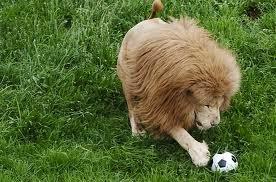 Animal Photo, Wild Animal Photo, Nice Animal Pic, Pet Animal Photo, Animal Pic, Animal Gallery, Beautiful Wild Animal. Lion Pic