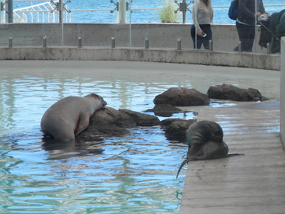 visite du New England Aquarium Boston