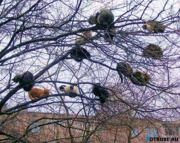 Kediler neden ağaca çıkar