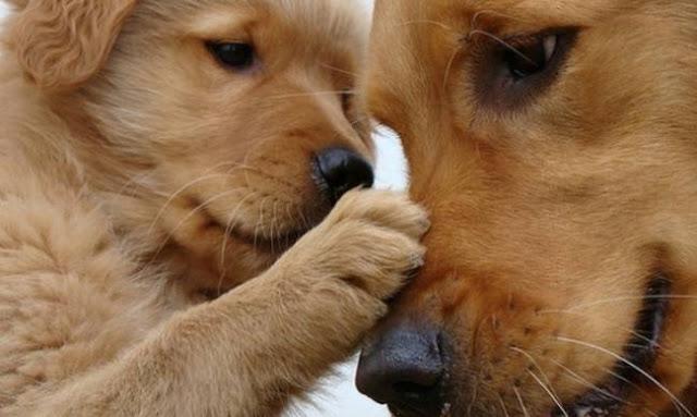 Κάλεσμα του Δήμου Άργους Μυκηνών για το πρόγραμμα προστασίας αδέσποτων σκύλων