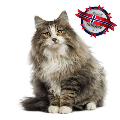 Norwegian Forest Cat: Made in Norway!
