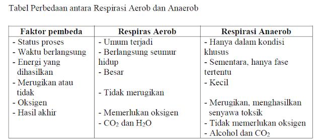 Tabel Perbedaan antara Respirasi Aerob dan Anaerob