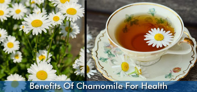 Benefits Of Chamomile For Health
