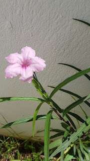 pink flowers collection, pink garden, pink flowers, pink theme, pink plants, pink color, pink bouquet,garden