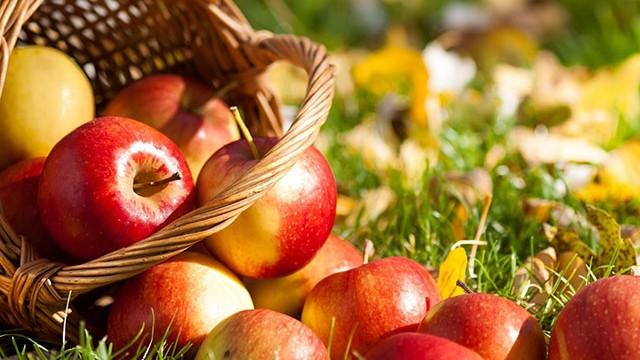 Inilah Khasiat dan Manfaat Buah Apel