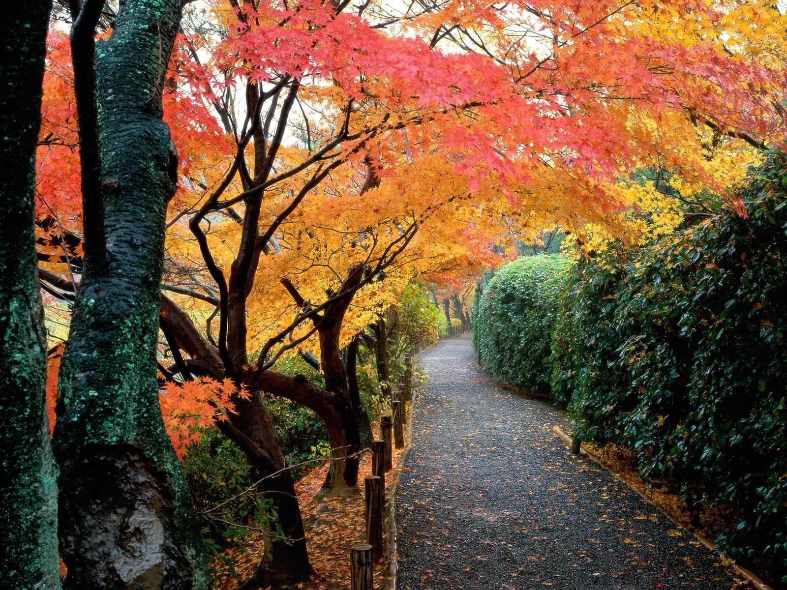 imagenes de otoño,wallpapers hd,fondos de pantalla