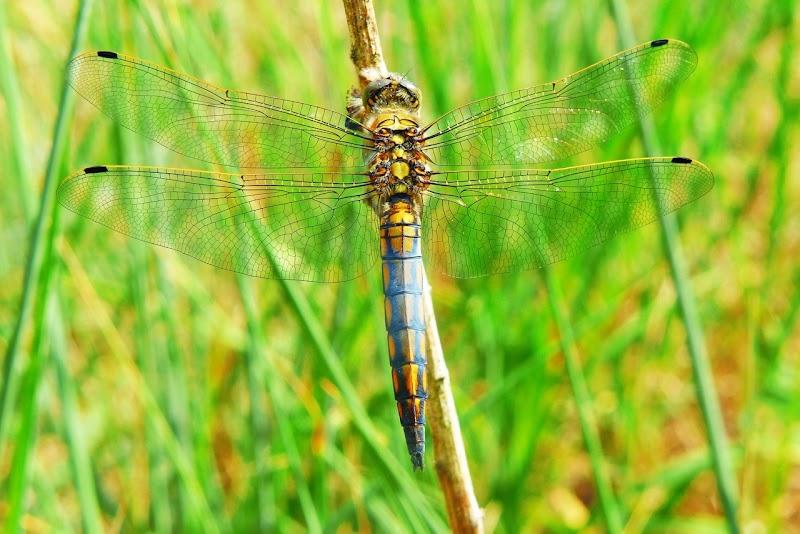 我看《蜻蜓效應》:經營社群,請善用「四片翅膀」的力量