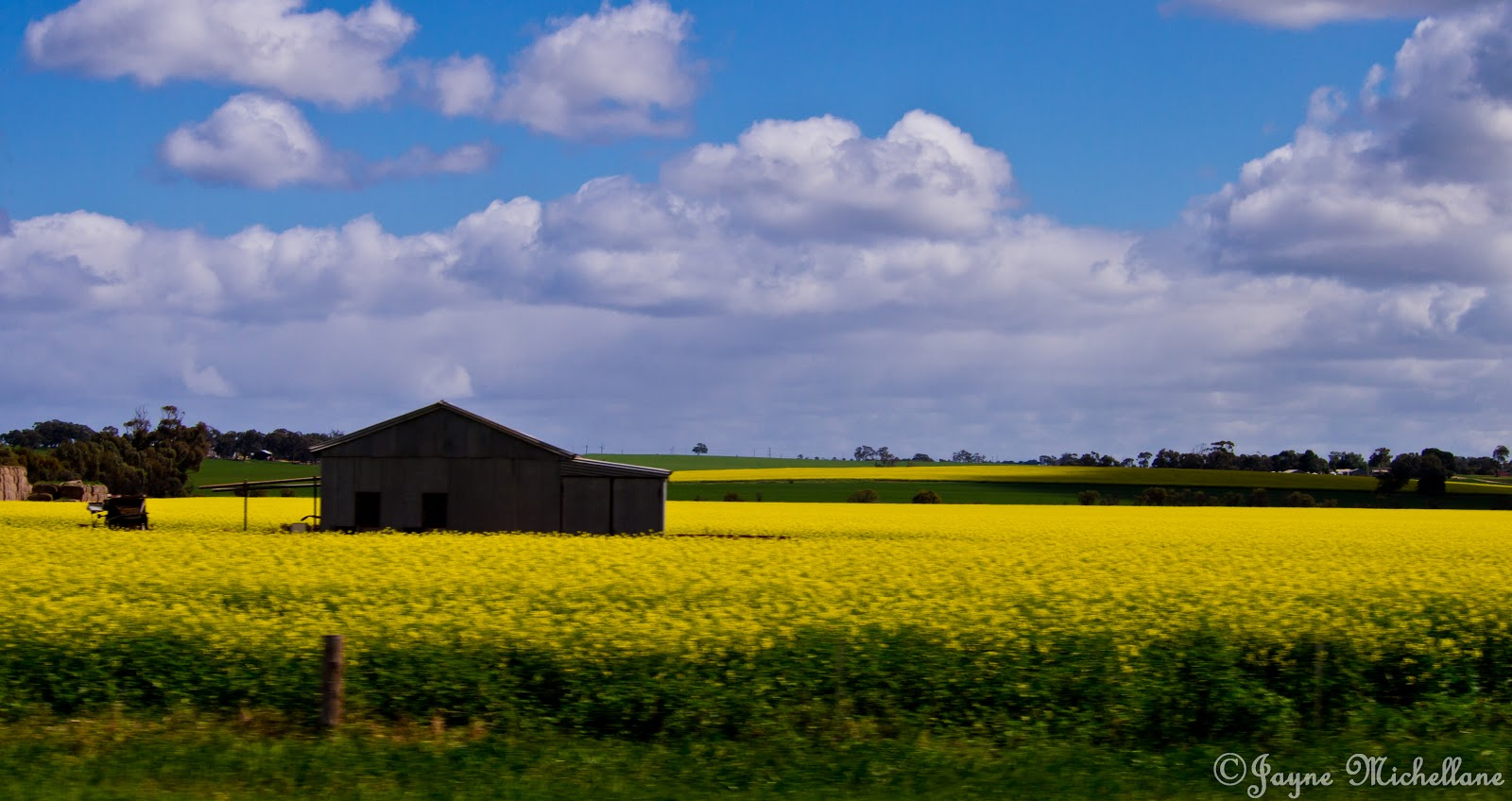 Canola Fields Quotes: Lady Jayne's Reading Den: October 2012