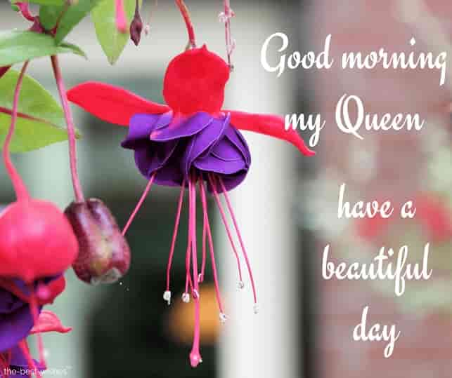 have a beautiful day my queen