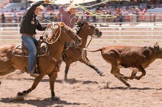 http://vnoticia.com.br/noticia/2883-provas-equestres-leiloes-e-festa-do-laco-na-59-expoagro