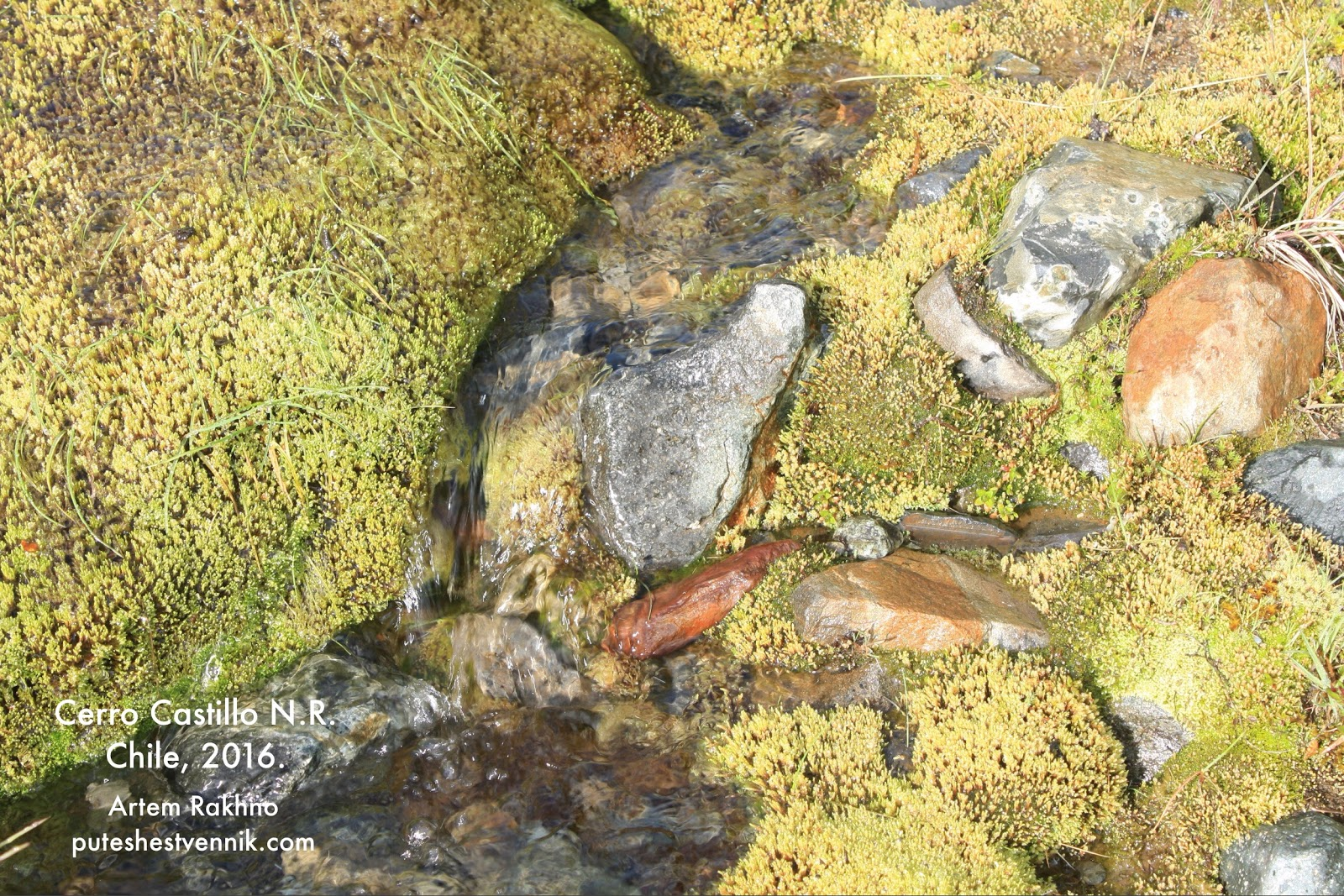 Ручей бежит через камни и мох