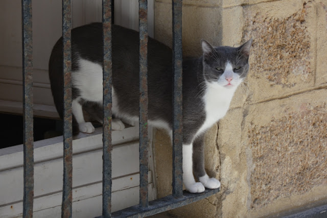 Cadiz cat