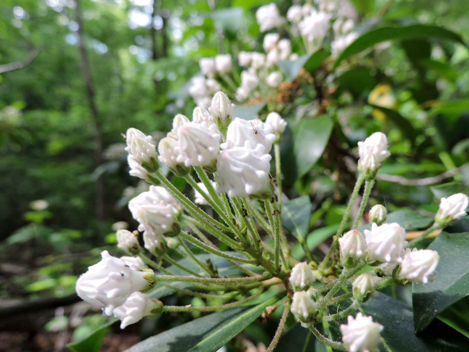 Pictures of Different White Flowers - The Spruce