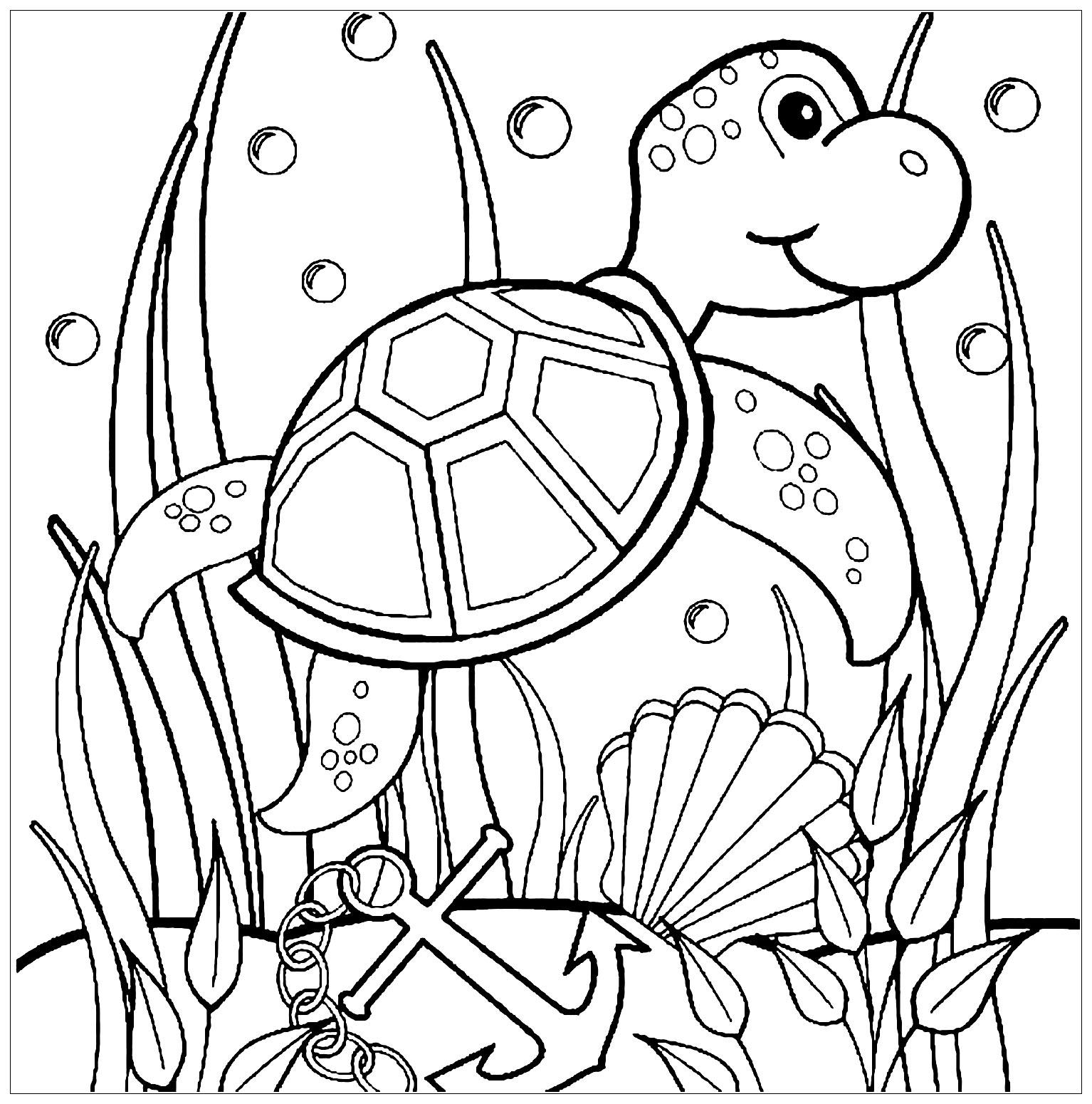 Tranh cho bé tô màu con rùa và cây rong