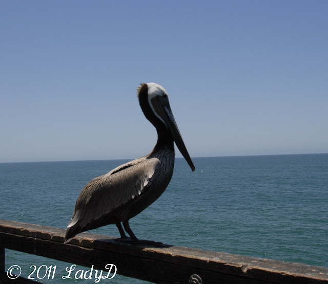 Pelican at the Pier: LadyD Books