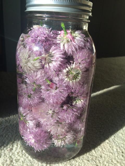 chive flower blossom vinegar