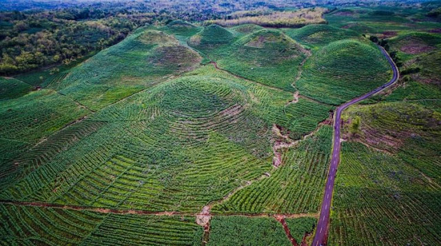 Bukit Teletubbies Gunungkidul adalah bekas hutan jati