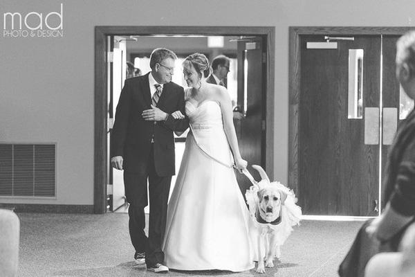 Chó cưng an ủi cô chủ trong ngày cưới gây xúc động
