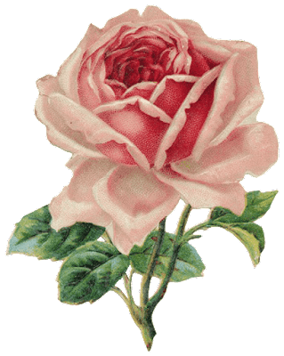 Old Rose Png Image