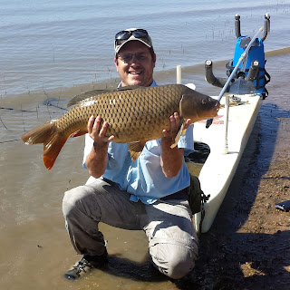 24lb Colorado Common Carp on the fly