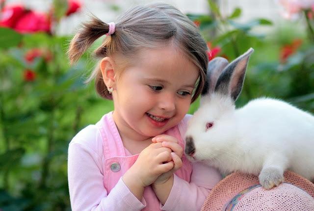 Cara berternak Kelinci, Peternakan, Cara beternak Kelinci Hias Bagi Pemula, Car merawat Kelinci Hias, Tips budidaya Kelinci Hias, Jenis-jenis Kelinci Hias