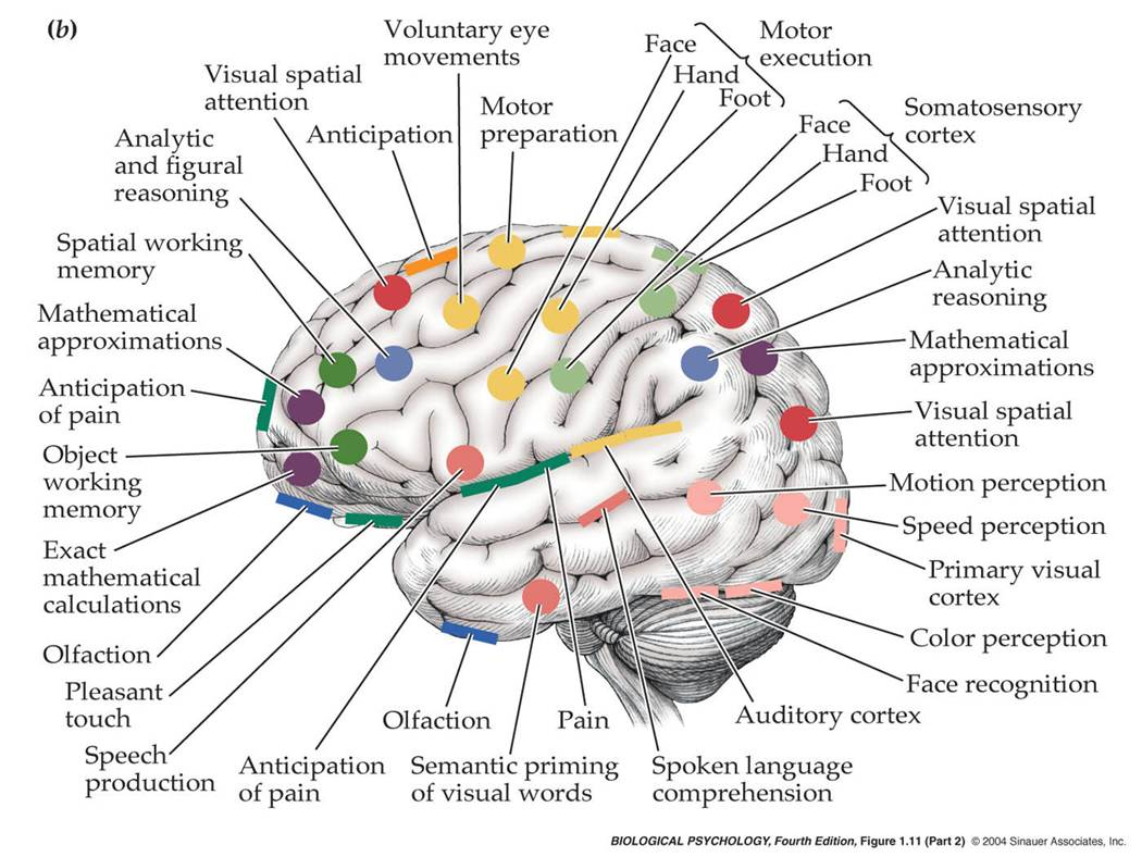 Left Side Brain Functions Diagram Car Stereo Amplifier Wiring Physiatry Not Your Typical Field Of Medicine How We