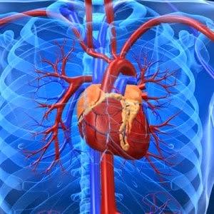 Tips Menjaga Jantung Tetap Sehat