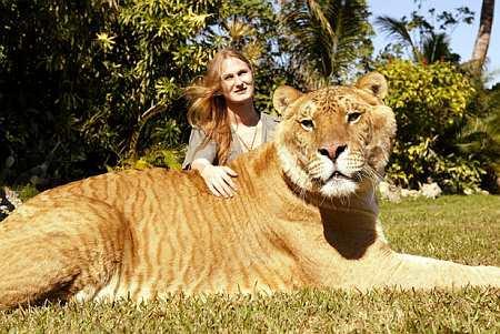 Tigreão (Tigre+Leão)