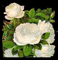 flower rose botanical image transfer vintage illustration