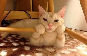 amazing creatures funny cats  part 78 35 pics  10 gifs