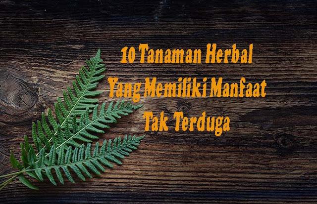 Tanaman Herbal Yang Memiliki Manfaat Tak Terduga