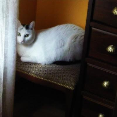 exterior-gato