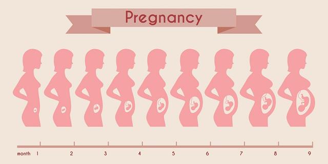 مراحل نمو الجنين بالاسابيع