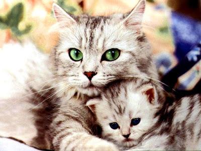 Cute Cats Kitty Pets 02