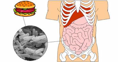 bacterium E. coli