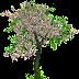 Klasifikasi Menggunakan Decision Tree di R
