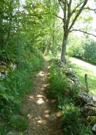 sens  chemin  nature