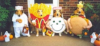 chiens hamburger