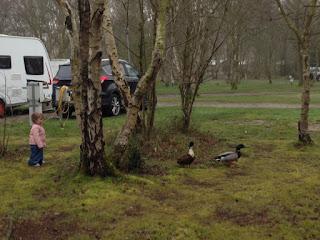 Ducks at Haven's Wild Duck Park