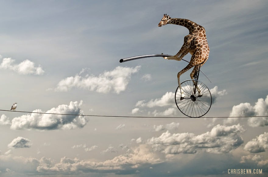 12-Giraffe-with-Bird-Chris-Bennett-Animal-Photographs-of-Surreal-Art-www-designstack-co