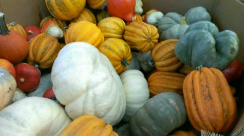 fall pumpkins n squashes