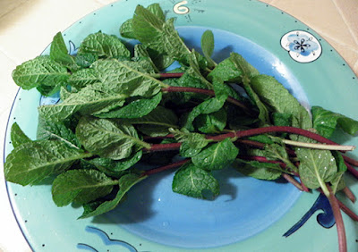 Bunch of mint on a plate
