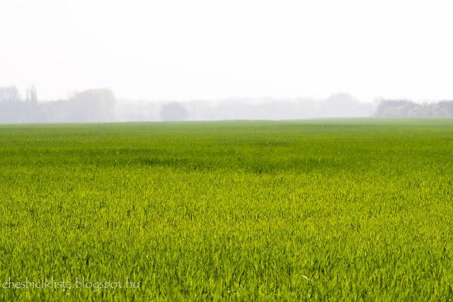 Tavaszi pára egy gabonaföldön reggel