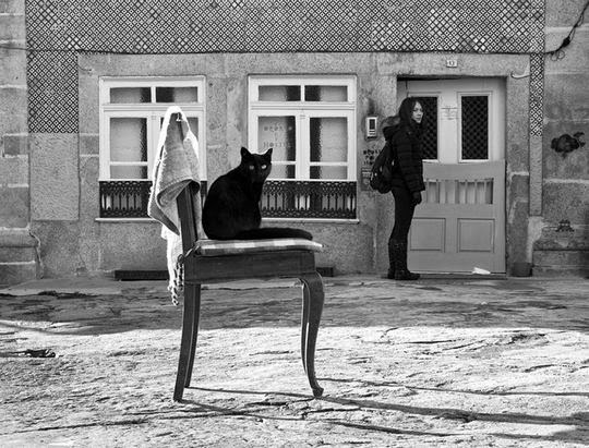 cat pictures black and white black cat