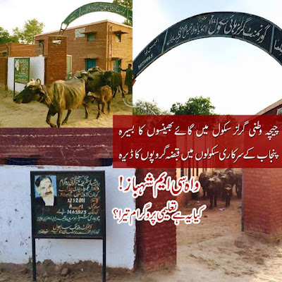A Chichawatni Girls School being used as an animal shed. A shining example of CM Shehbaz education policy.